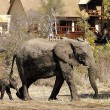 Elephant Plains Lodge - Sabi Sabi